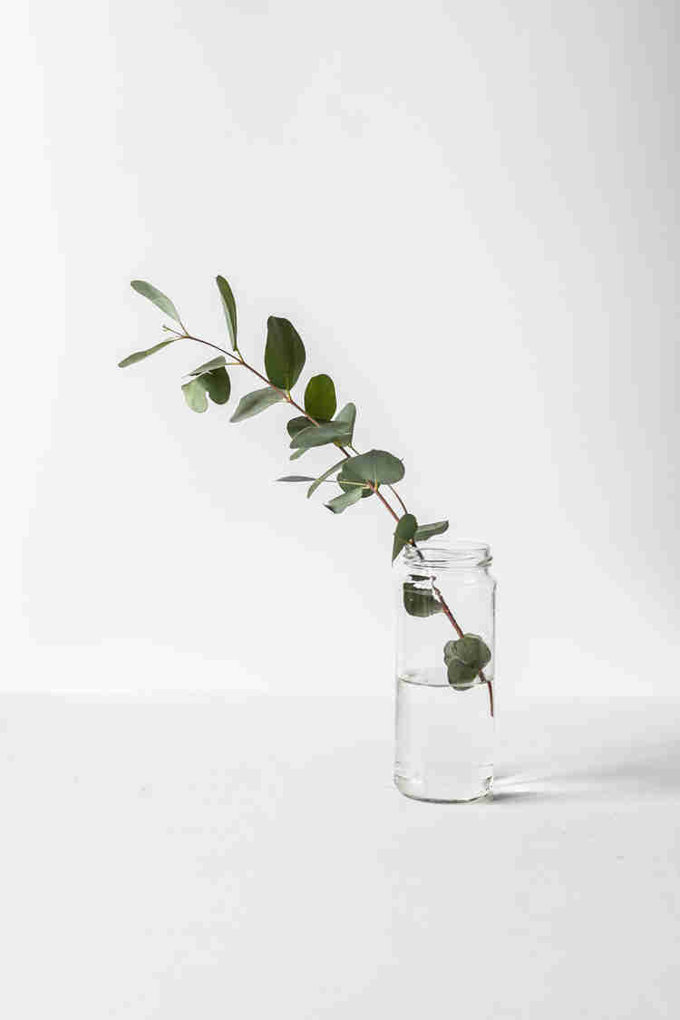 Jar with a gum leaves on white background.
